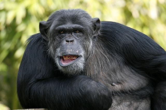 Fauna, Mammal, Portrait, Animal