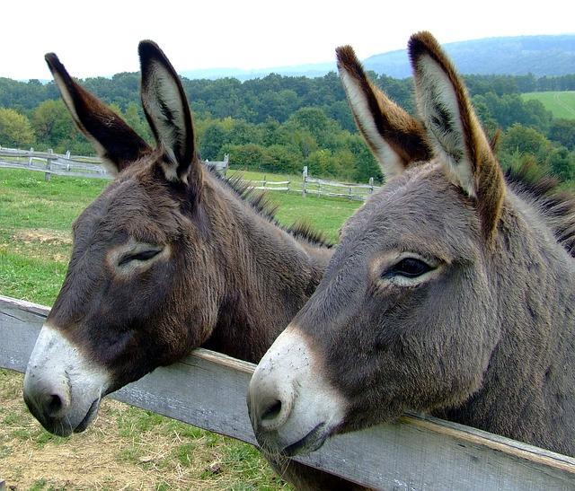 Donkeys, Animals, Forest, Trees, Woods, Fence, Portrait
