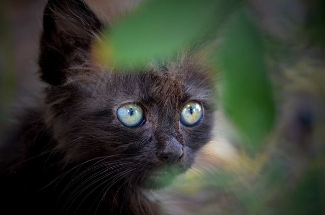 Cute, Animal, Portrait, Mammal, Cat, Fur, Eye, Nature