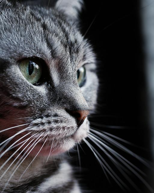 Cat, Fur, Mammals, Portrait