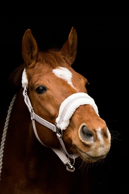 Horse, Portrait, Head, Nostrils, Animal