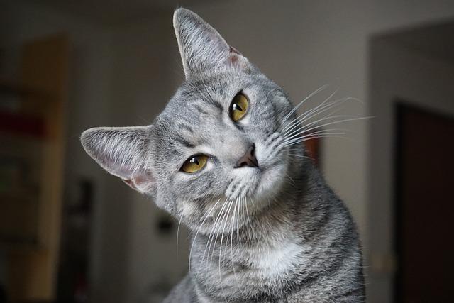 Animalia, Cat, Portrait, Cute, Home