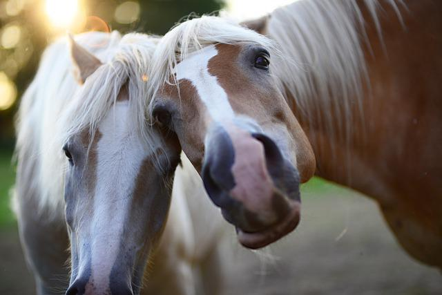 Horses, Animals, Love, Portrait, Cute, Mane, Pony