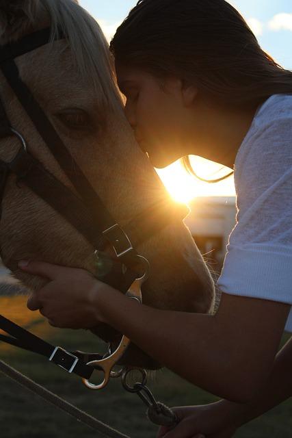 Horse, Girl, Love, Kissing, Kiss, Sunset, Son, Portrait