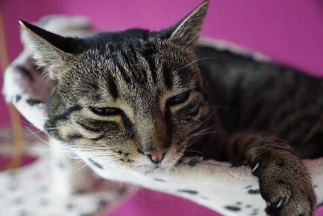 Cute, Animal, Cat, Pet, Mammal, Portrait, Fur, Small