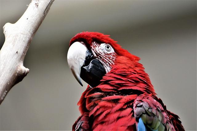 Bird, Wildlife, Nature, Animal, Portrait, Feather