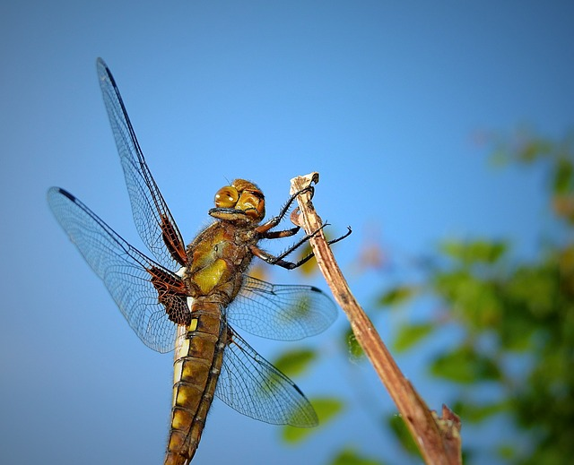 Ważka, Insect, Portrait, Nature