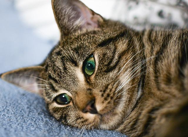 Animal, Cat, Cute, Pet, Mammal, Portrait, Fur, Kitten
