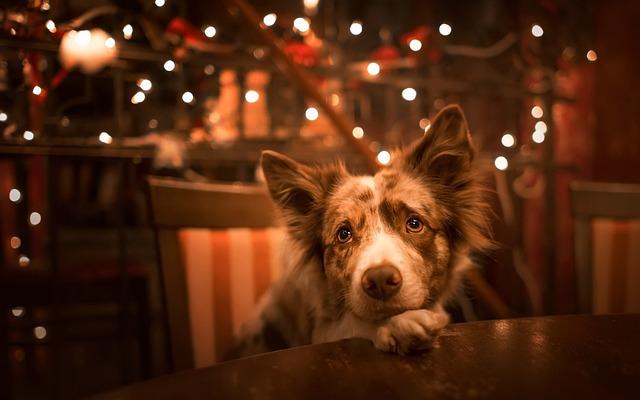 Dog, Portrait, Mammals, Canine, Pets