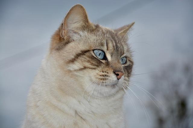 Cat, Pussy Nala, Portrait Profile, Cute, Animal