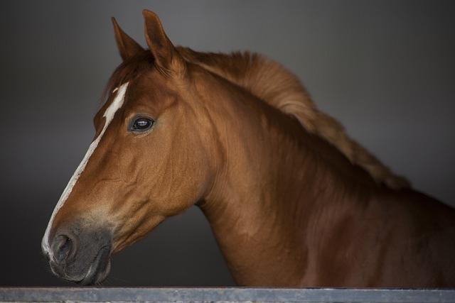 Horse, Stallion, Portrait, Animal Head, Beautiful