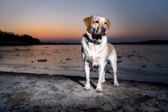Dog, Waters, Animal, Nature, Pet, Sky, Young, Portrait