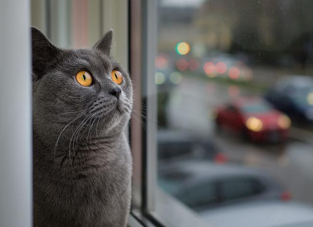 Cat, Portrait, Animal, Pet, Cute, Window, Cat Face