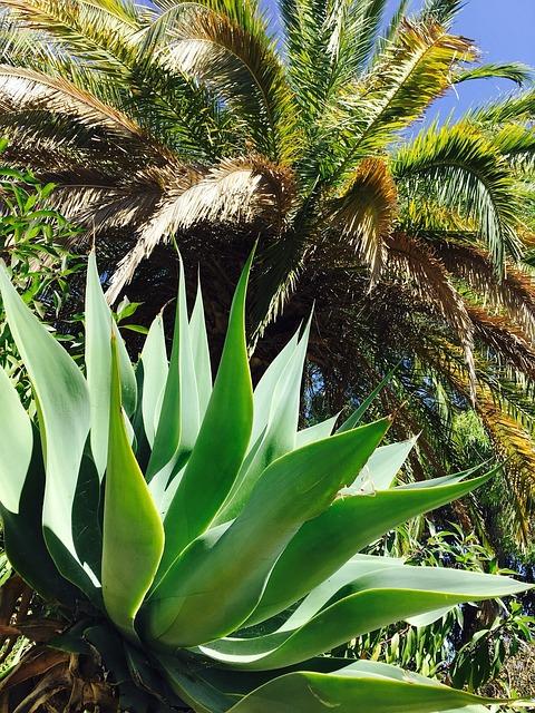 Nature, Portugal, Algarve, Factory, Palm, Juicy