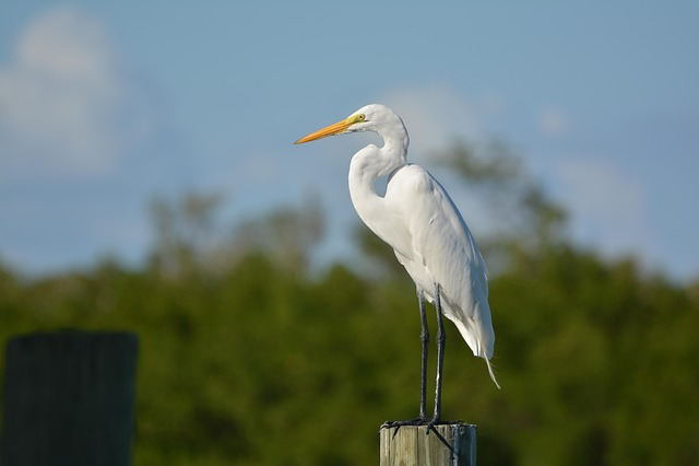 Bird, Egret, Rest, Piling, Post, Nature, Water