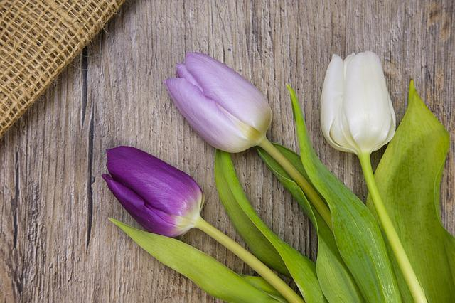 Tulips, Flowers, Spring, Easter, Map, Postcard