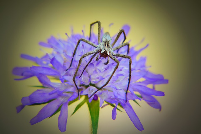 Darownik Wonderful, Female, Spider, Flower, Posts