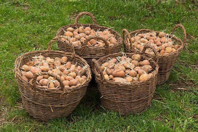 Potatoes, Basket, Harvest, Plant, Potato