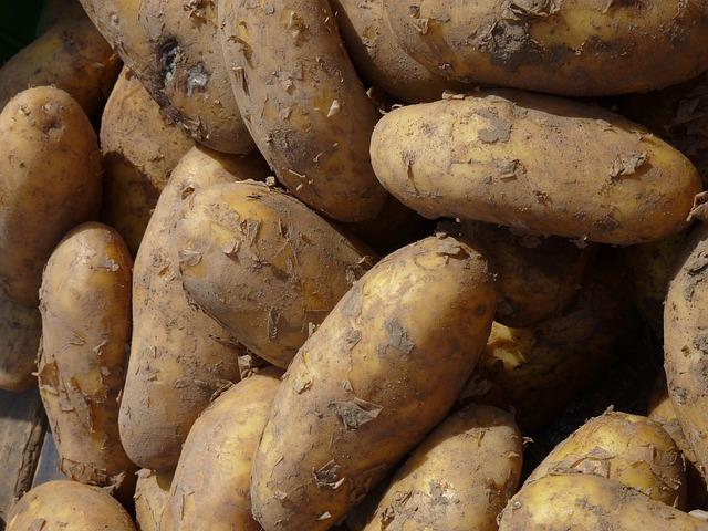 Potato, Potatoes, Nachtschattengewächs, Potato Field