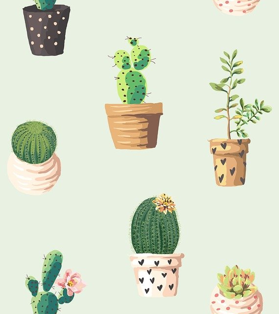 Cactus, Plants, Pots, Flowers, Pattern, Cute Wallpaper