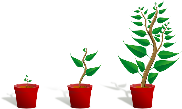 Sapling, Plant, Growing, Seedling, Growth, Potted Plant