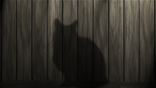 Cat, Black Cat, Power, Mieze, Black, Animal