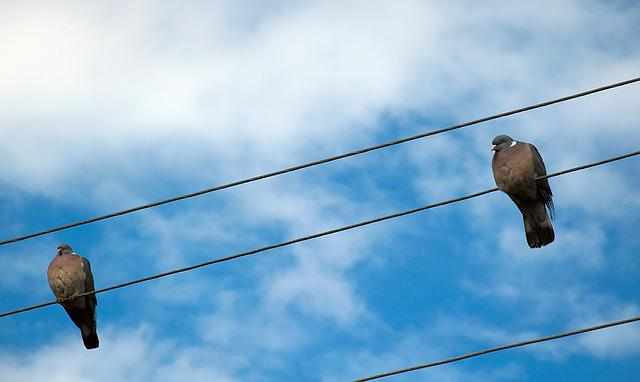 Pigeons, Power Line, Sit, Sky, Pigeon Pair