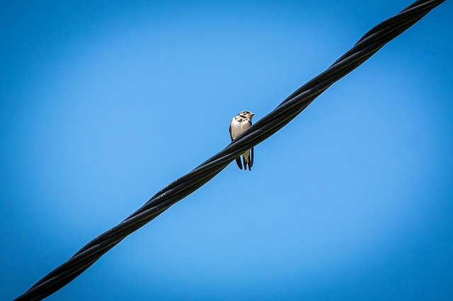 Schwalbe, Power Line, Sky, Bird, Power Cable, Energy