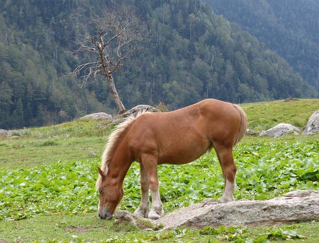 Horse, Pacer, Prado, Val D'aran, Pastures