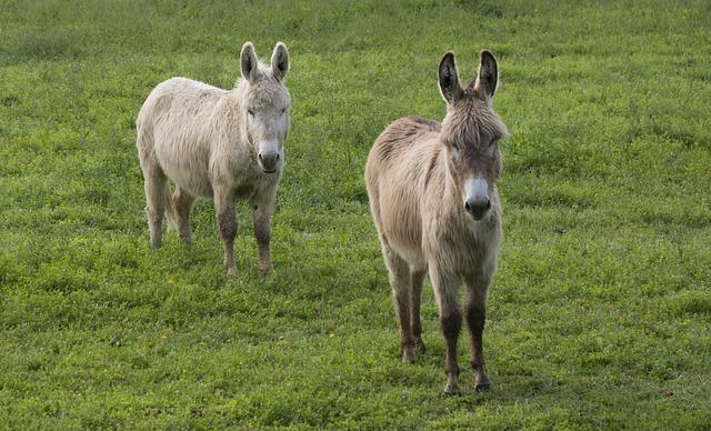 Donkey, White Ass, Gray Donkey, Prairie, Donkey Runs