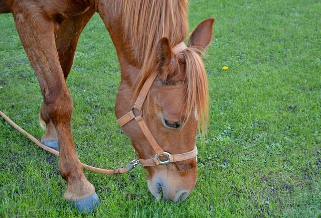 Horse, Horse Eating Grass, Horse Grass, Green, Prairie