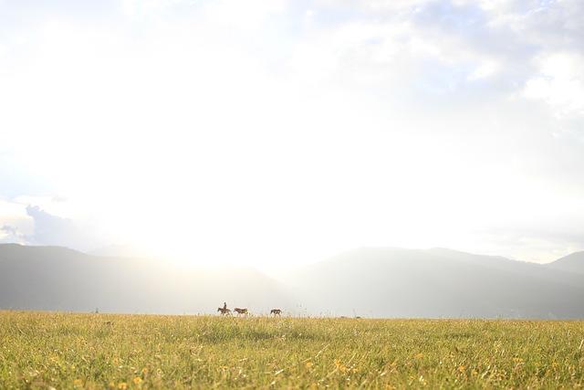 Views, Shangri-la's, Prairie