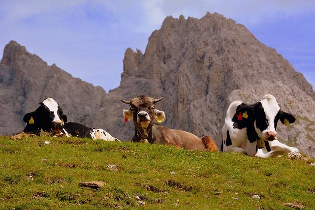 Cow, Pasture, Rest, Dolomites, Mountain, Prato, Animals