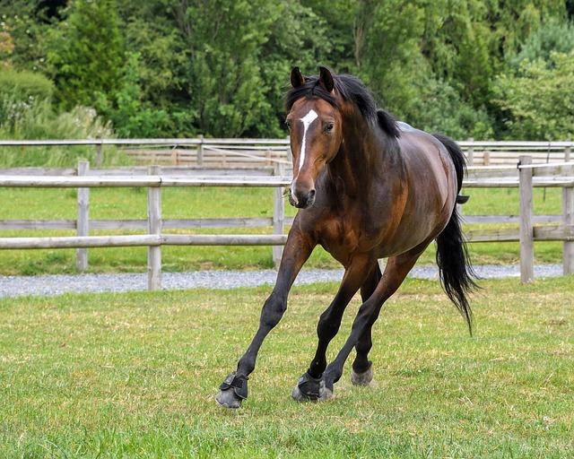 Horse, Pre, Run, Grass