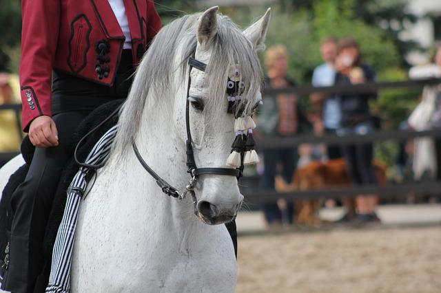 Andalusians, Horse, Spain, Pre, Reiter, Ride, Caballo