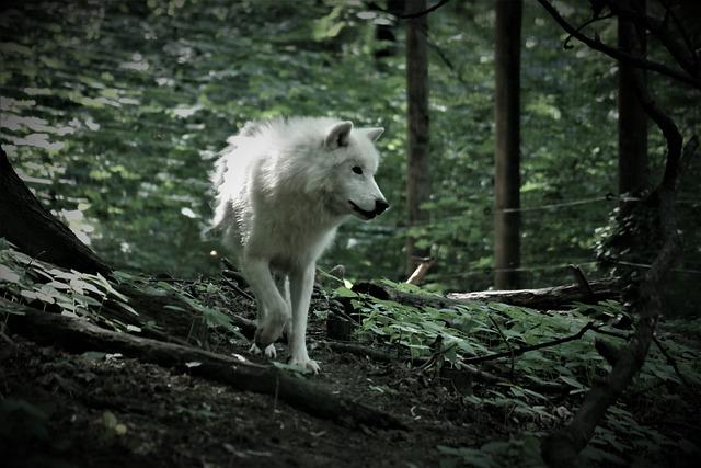 Wolf, Animal, Predator, Pack Animal, Zoo, Carnivores