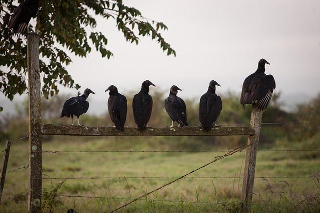 Birds, Vulture, Gang, Fence, Club, Group, Predator
