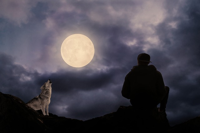 Full Moon, Moonlight, Man, Wolf, Predator, Howl, Rock