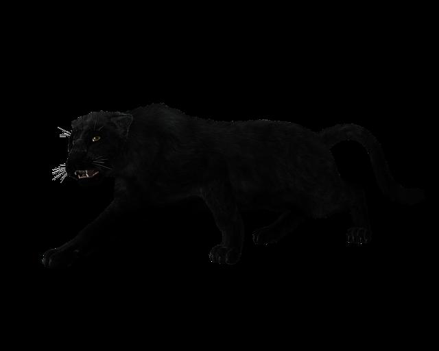 Panther, Black Big Cat, Sneak, Mystical, Predator