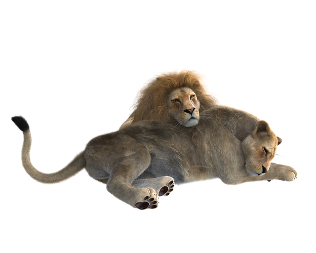 Lion, Pair, Predator, Big Cat, Wildcat, Together