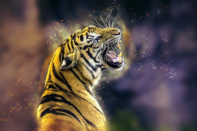 Tiger, Cat, Big Cat, Animal, Predator, Roar, Feline