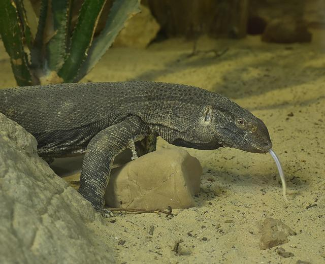 Monitor, Yellow, Prehistoric Times, Lizard, Reptile