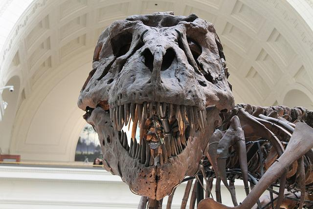 Tyrannosaurus, Prehistoric, Skeleton, Dinosaur, Bones