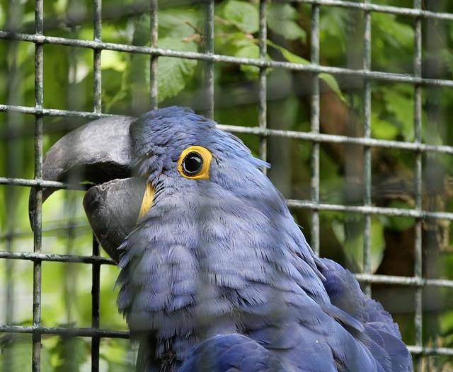 Ara, Bird, Parrot, Blue, Bird Park Marlow, Pretty