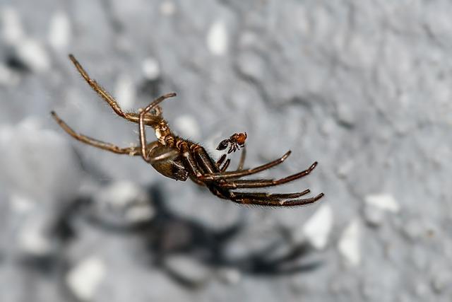 Spider, Ant, Prey, Invertebrate, Arachnid