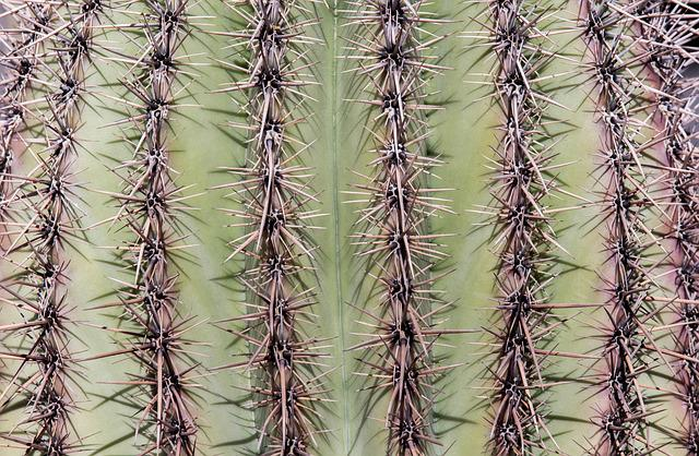 Cactus, Spine, Sharp, Prickly, Desert