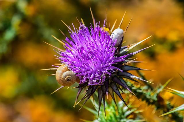 Nature, Prickly, Thistle, Flower, Spine, Snail, Purple