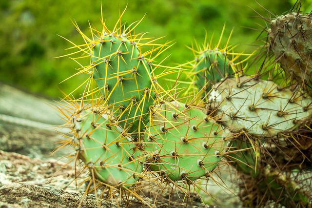 Cactus, Spine, Nature, Flora, Prickly