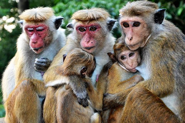 Monkey, Mammal, Animal World, Primate, Nature, Baby
