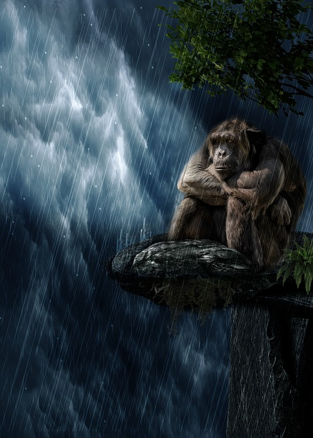 Rain, Monkey, Mammal, Animal World, Nature, Primate